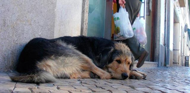 Αποτέλεσμα εικόνας για αδεσποτο σκυλι