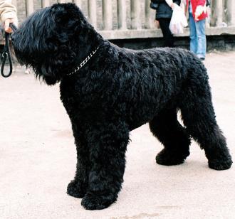 Ποιος είναι ο σκύλος του Στάλιν;