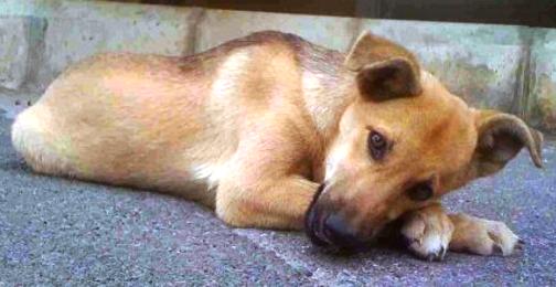Ο νέος νόμος του 2012 για τα αδέσποτα και δεσποζόμενα ζώα