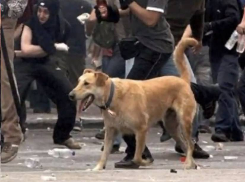 Λουκάνικος, Ο σκύλος