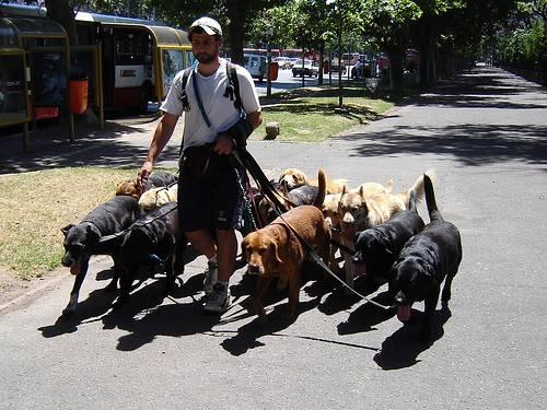 Γιατί η καθημερινή βόλτα  είναι απαραίτητη για το σκύλο μας