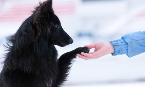 Χρήσιμες συμβουλές για την εκπαίδευση σκύλων