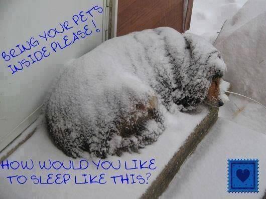 Τα ζώα κρυώνουν όπως και εμείς και ακόμα περισσότερο