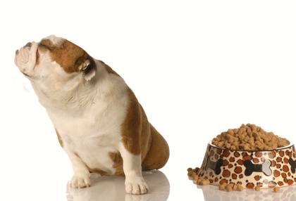 Πως να ταίσετε το σκύλο σας για να είναι ισορροπημένος