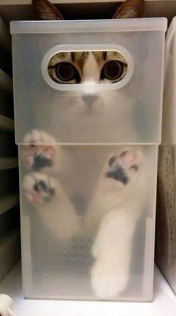 Γάτες, δεν παίζονται