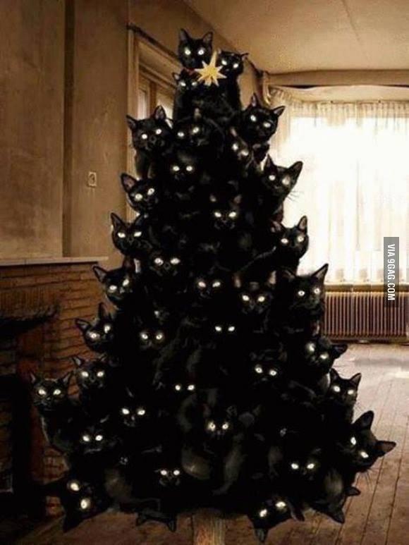 Μαύρη γάτα τα χριστούγεννα