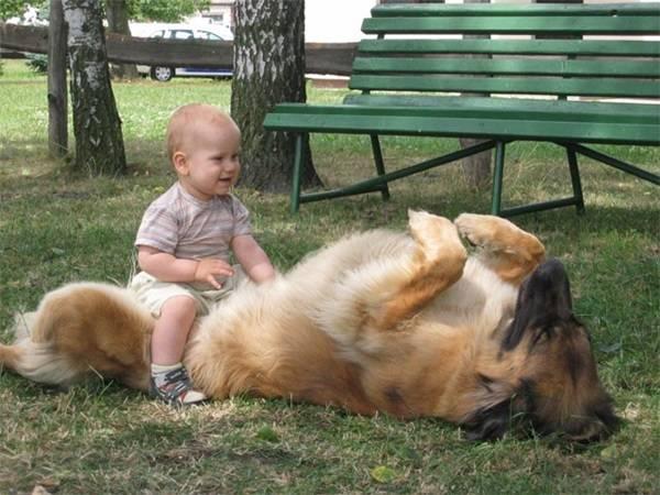 σκυλία γίγαντες