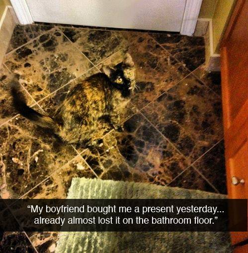 Γάτα ασορτί πλακακια