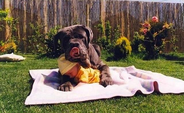 Ο καλύτερος φίλος του μωρού