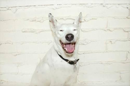 Happy Cute Dogs