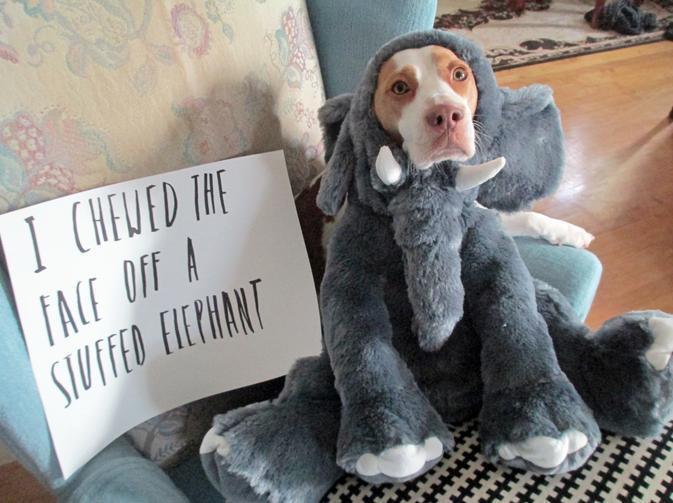 σκανταλιάρης σκυλος παίρνει το μάθήμα του