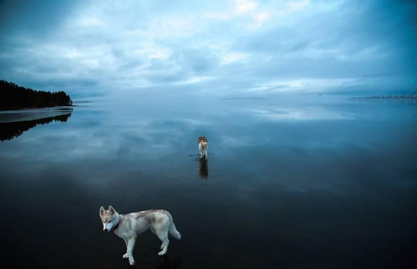 Δύο Χάσκυ σε μια παγωμένη λίμνη