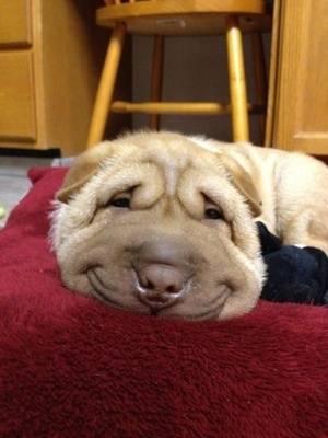 Χαμόγελα απο σκυλιά
