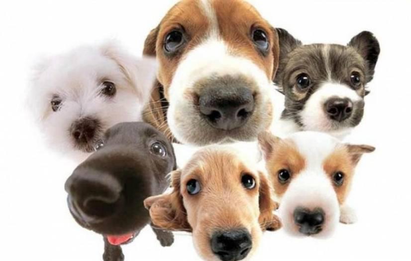 Ψάχνετε Pet Shop online; Το Pets Friends εξυπηρετεί όλη την Ελλάδα!