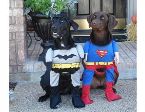 αποκριατικες στολες για σκυλους