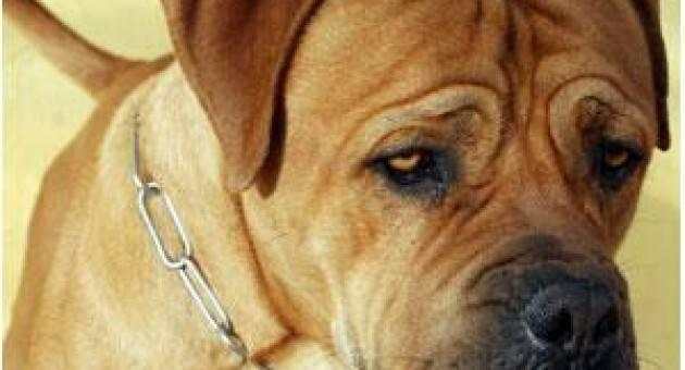 Πως αναγνωρίζουμε ότι κάτι δεν πάει καλά με το σκύλο μας ή την γάτα μας. Συμπτώματα.