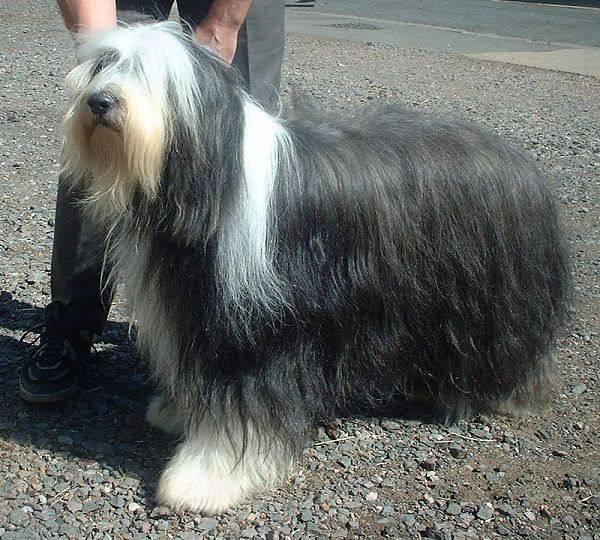 Σκύλοι μεγάλο πέος
