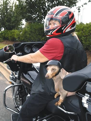 Σκύλος και μοτοσυκλέτα