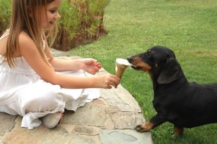 Σκυλια τρώνε παγωτο