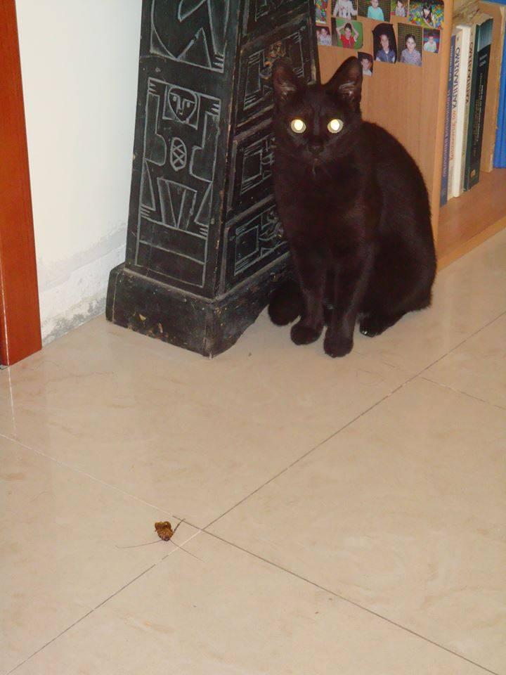 Τι να την κάνετε την απολύμανση; Βάλτε μια γάτα στο σπίτι σας