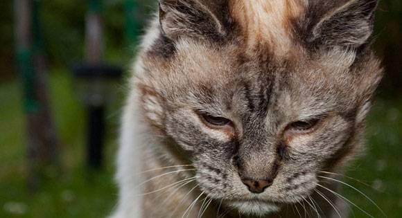 Τι δεν πρέπει να τρώει η γάτα σας