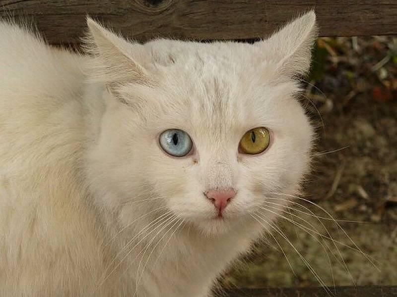 Ζώα με διαφορετικό χρώμα μάτια