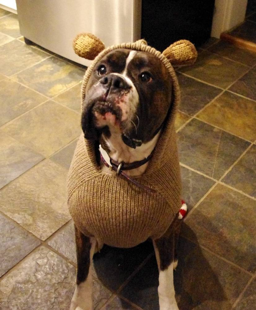 Boxer ενας σκυλος cartoon