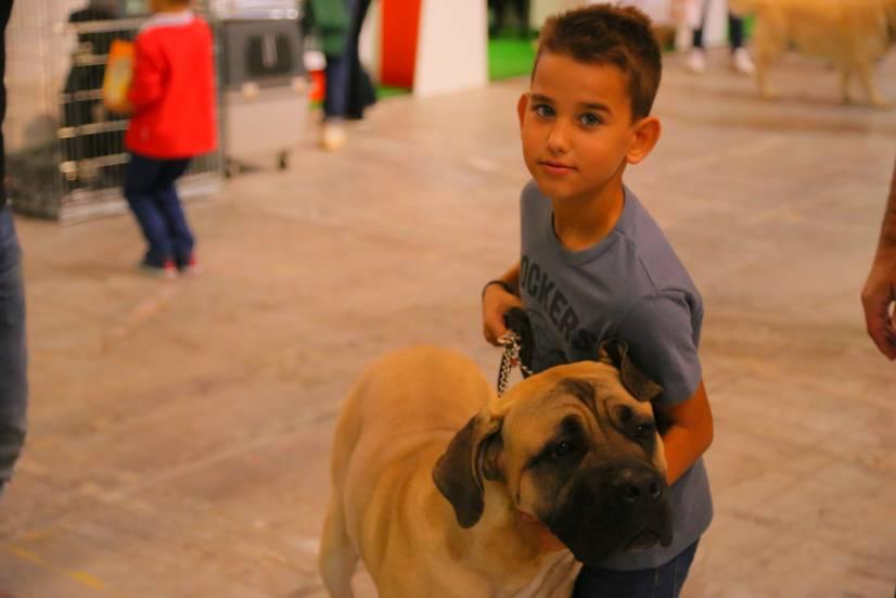 Dog Festival Athens 2013 φωτογραφιες