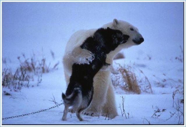 Σκύλος με αρκούδα
