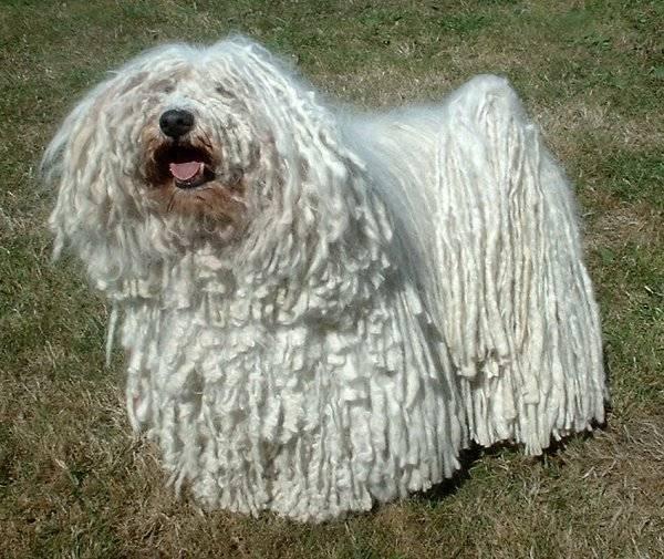 το μεγάλο πουλί σκύλα com