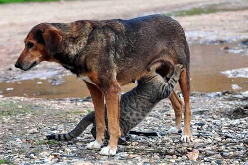 Πρόστιμα ποινές, για όσους δεν προσέχουν τα ζώα τους συμπεριλαμβανομένων και όσους τα εμπορεύονται