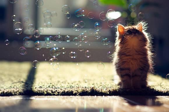 Το ποιο ομορφο γατάκι