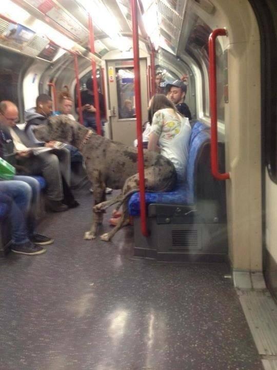 Ο ευγενής Γίγας στο Μετρό...