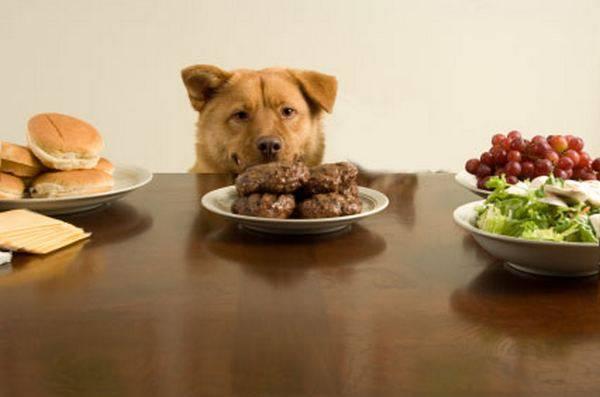 Τι κάνουν τα ζώα όταν δεν κοιτάζουμε