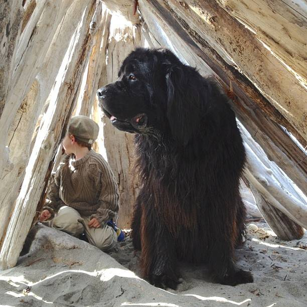 Παιδί και σκυλος