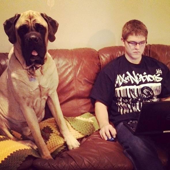τεράστια σκυλιά