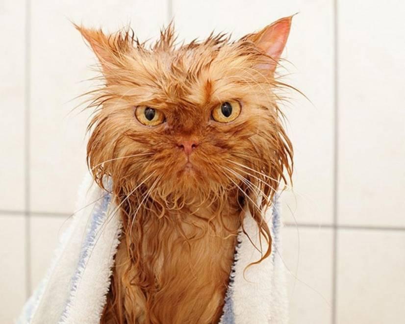 Funny wet cat pics