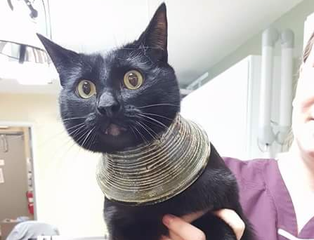 Cleopatra Cat