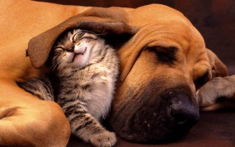 Σκυλος και Γάτα