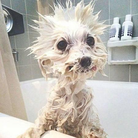 Funny wet dog pics