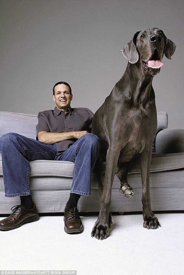 Ο μεγαλύτερος σκύλος στον κόσμο