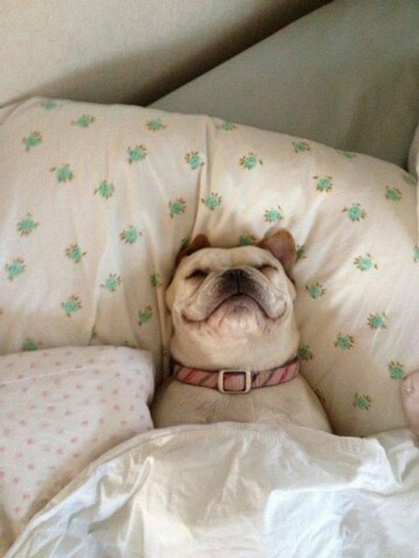 υπνος κρεβάτι και σκυλος