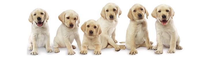 Τα πλεονεκτήματα του να είσαι ιδιοκτήτης σκύλου