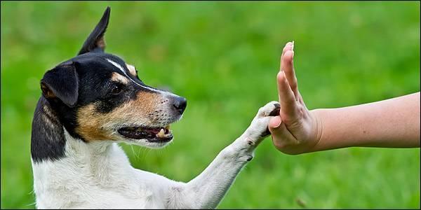 Ποιά τα πιό συνηθισμένα λάθη στην εκπαίδευση του σκύλου