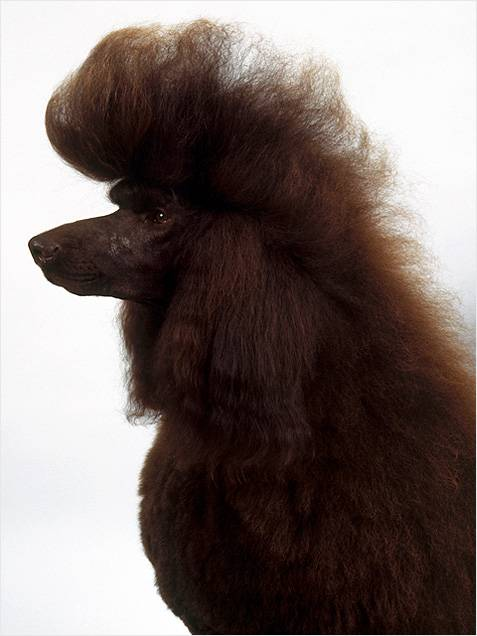 Σκυλια με υπέροχα μαλλια