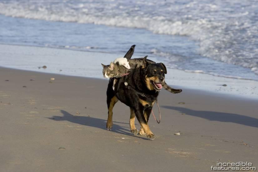 σκυλος, γατα και ο ποντικος