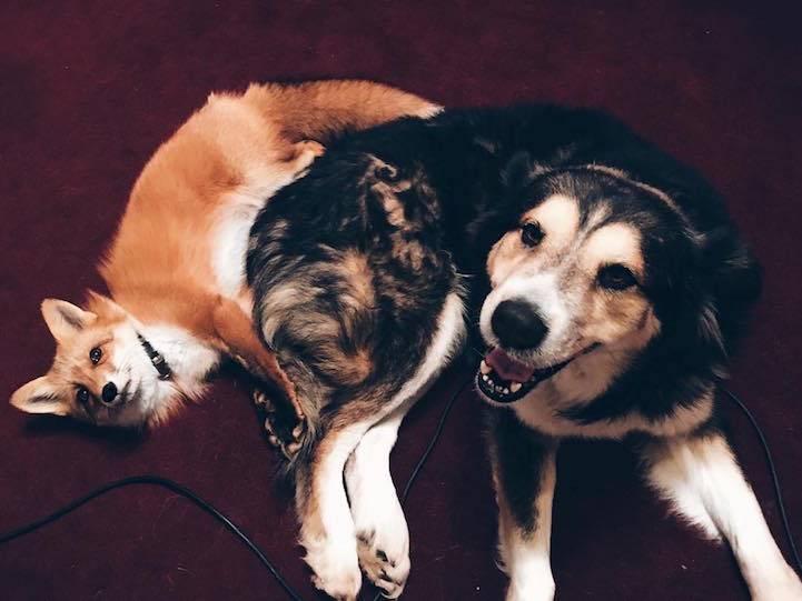 Σκυλος και αλεπου