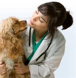 Ιατρική φροντίδα σκύλου, γάτας.