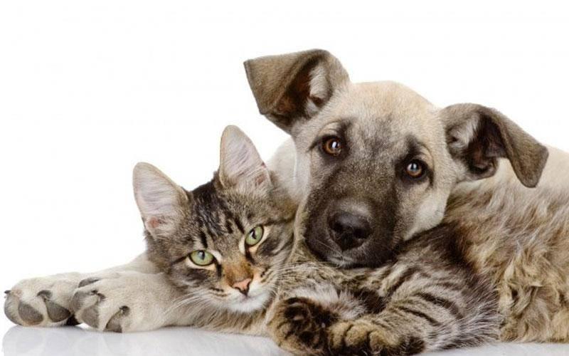 Διατροφή σκύλου και γάτας: Το Petshop88 σας ενημερώνει!