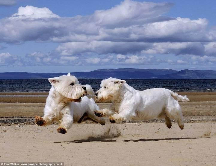 Υπέροχες φωτογραφίες με σκύλους